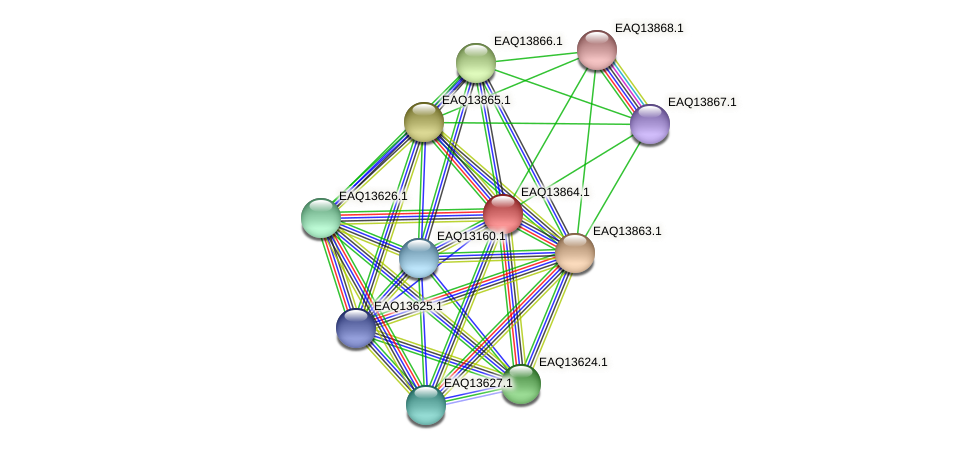 RB2654_12364 protein (Maritimibacter alkaliphilus) - STRING interaction network