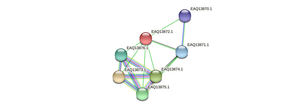 RB2654_12404 protein (Maritimibacter alkaliphilus) - STRING interaction network