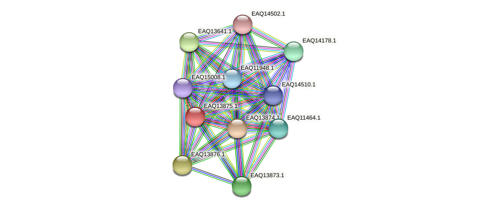 RB2654_12419 protein (Maritimibacter alkaliphilus) - STRING interaction network