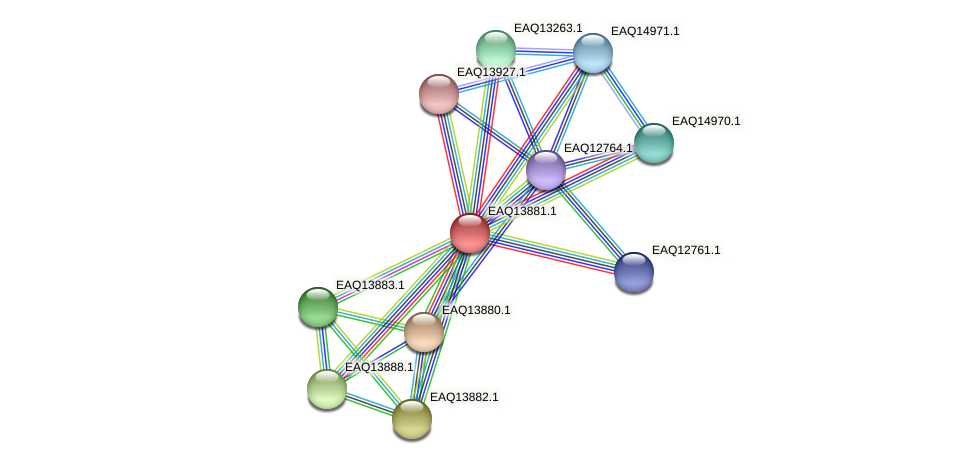 RB2654_12449 protein (Maritimibacter alkaliphilus) - STRING interaction network