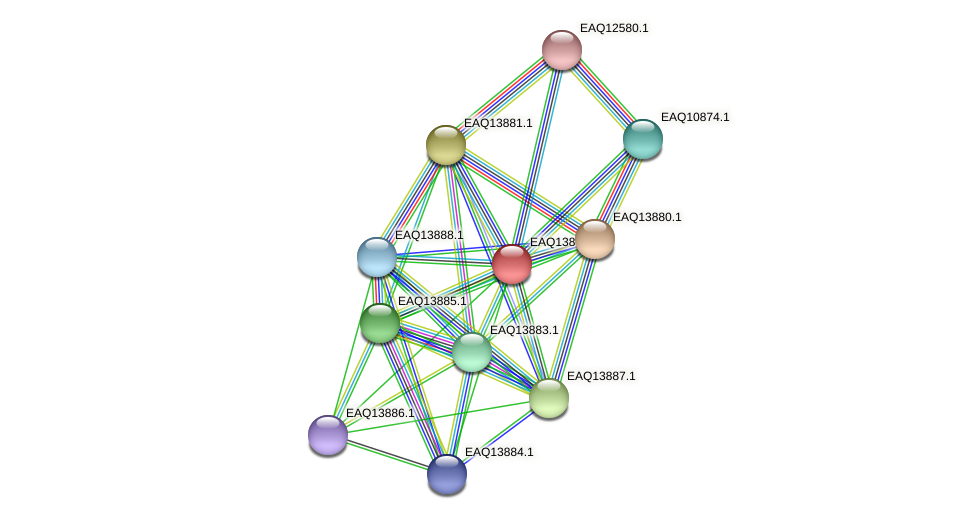 RB2654_12454 protein (Maritimibacter alkaliphilus) - STRING interaction network