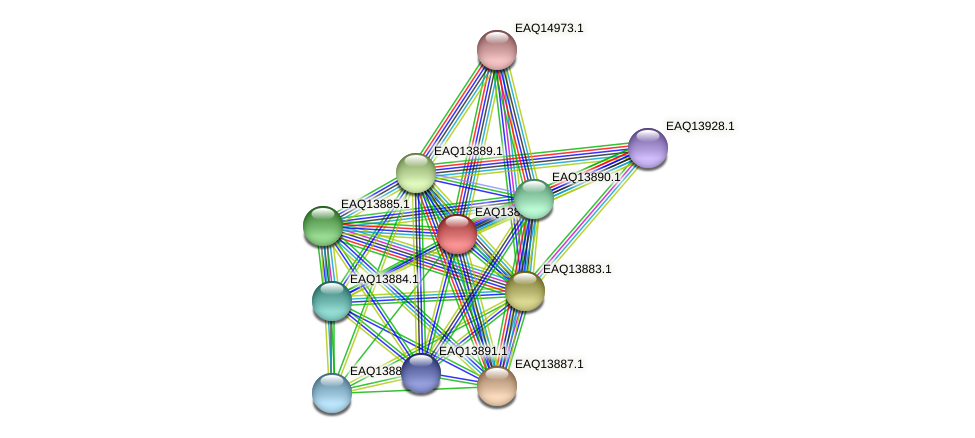 RB2654_12484 protein (Maritimibacter alkaliphilus) - STRING interaction network