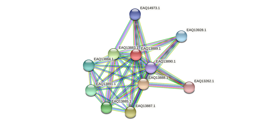 RB2654_12489 protein (Maritimibacter alkaliphilus) - STRING interaction network