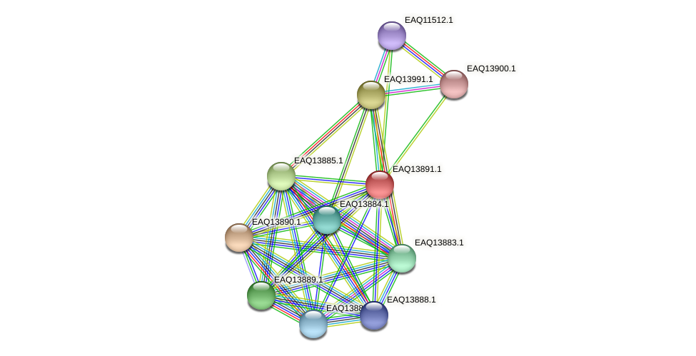 RB2654_12499 protein (Maritimibacter alkaliphilus) - STRING interaction network