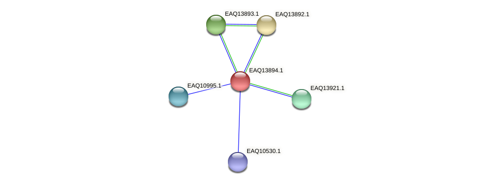 RB2654_12514 protein (Maritimibacter alkaliphilus) - STRING interaction network