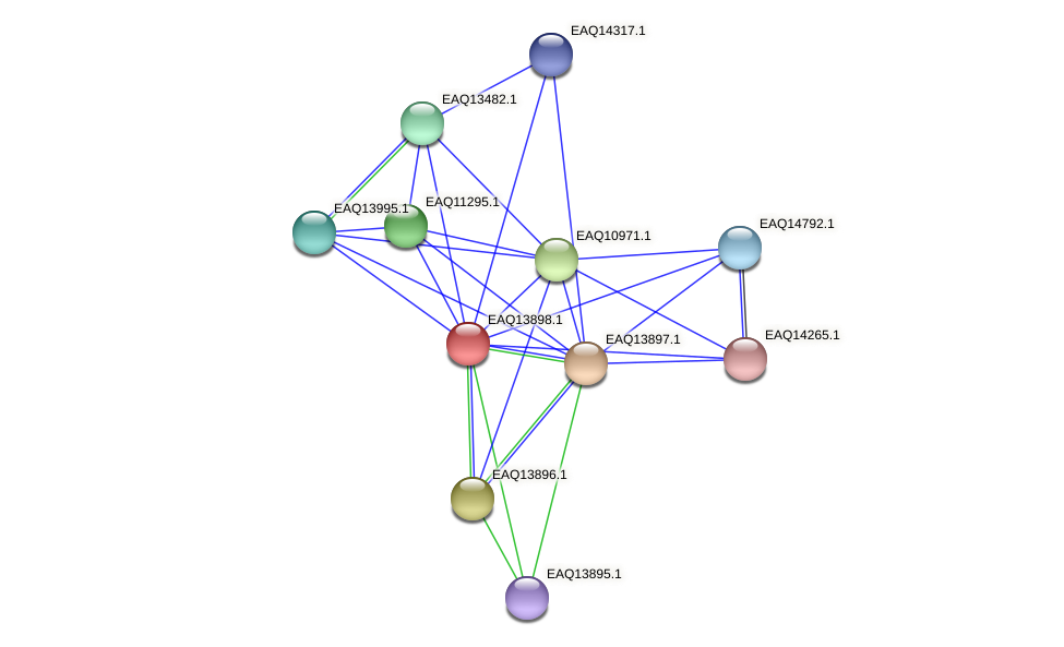 RB2654_12534 protein (Maritimibacter alkaliphilus) - STRING interaction network
