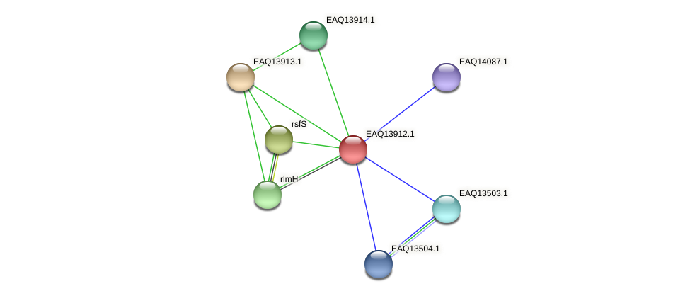 RB2654_12604 protein (Maritimibacter alkaliphilus) - STRING interaction network