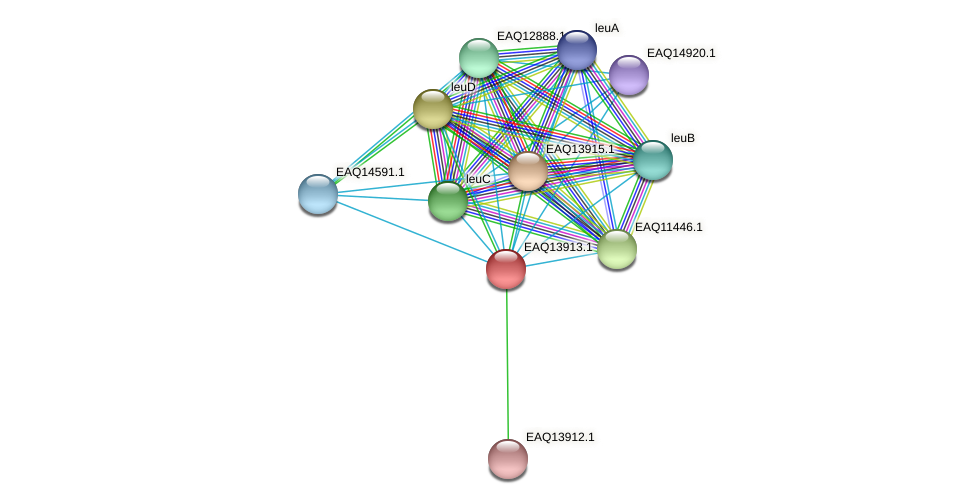 RB2654_12609 protein (Maritimibacter alkaliphilus) - STRING interaction network
