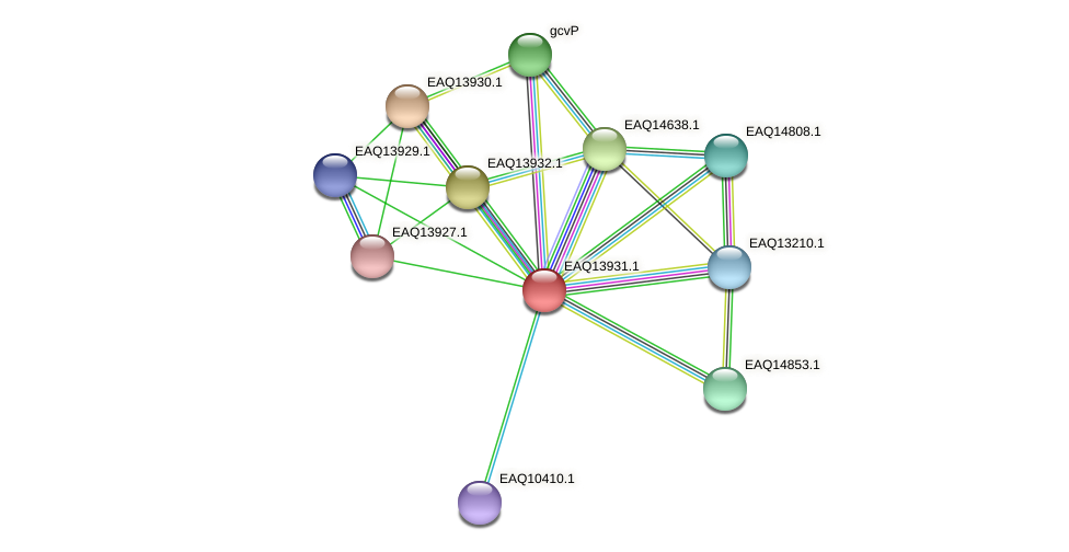 RB2654_12699 protein (Maritimibacter alkaliphilus) - STRING interaction network