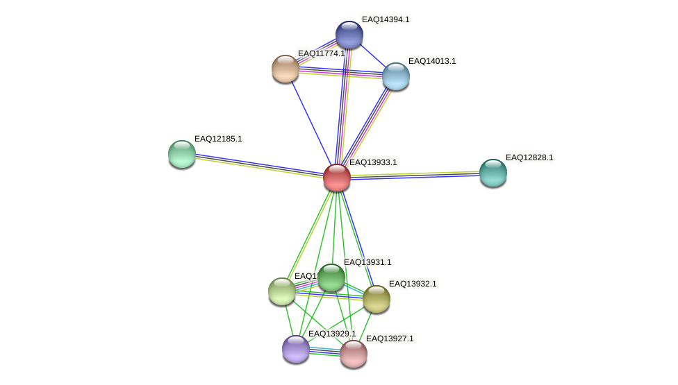 RB2654_12709 protein (Maritimibacter alkaliphilus) - STRING interaction network