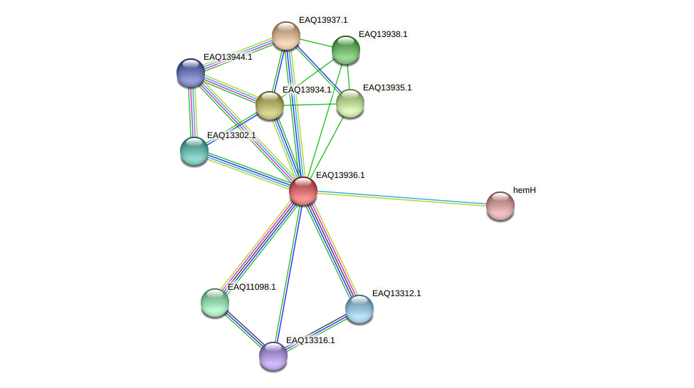 RB2654_12724 protein (Maritimibacter alkaliphilus) - STRING interaction network