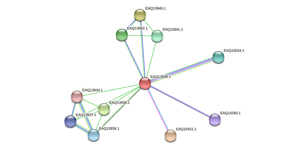 RB2654_12739 protein (Maritimibacter alkaliphilus) - STRING interaction network