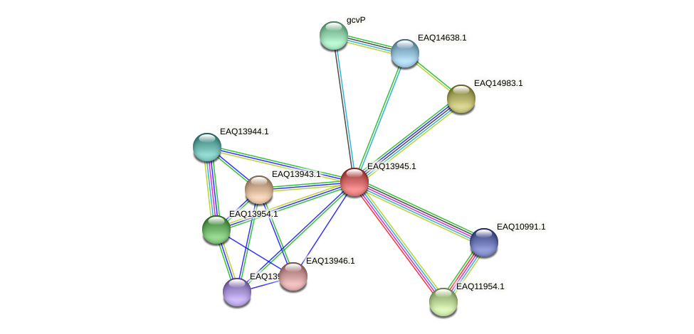 RB2654_12769 protein (Maritimibacter alkaliphilus) - STRING interaction network