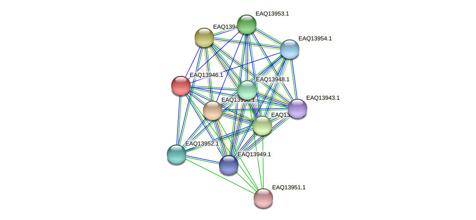 RB2654_12774 protein (Maritimibacter alkaliphilus) - STRING interaction network