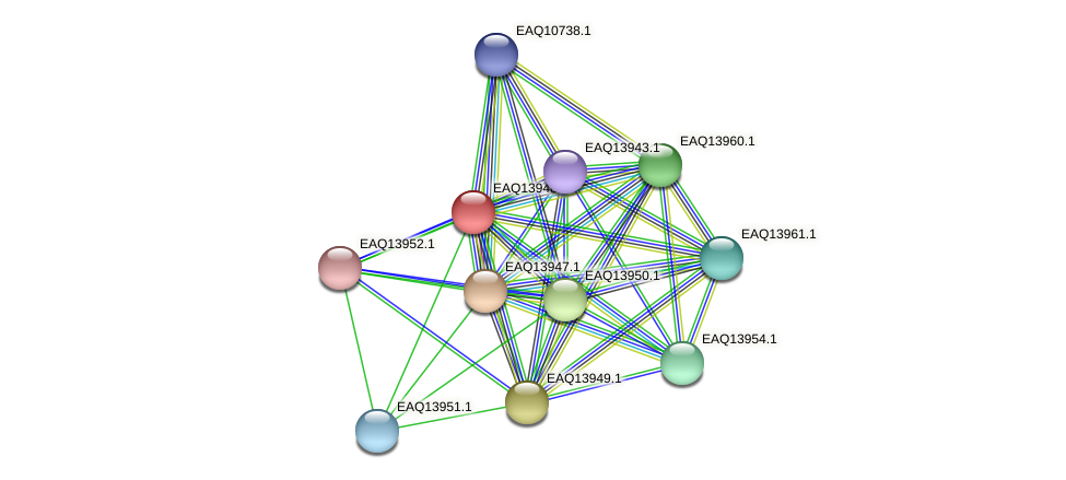 RB2654_12784 protein (Maritimibacter alkaliphilus) - STRING interaction network
