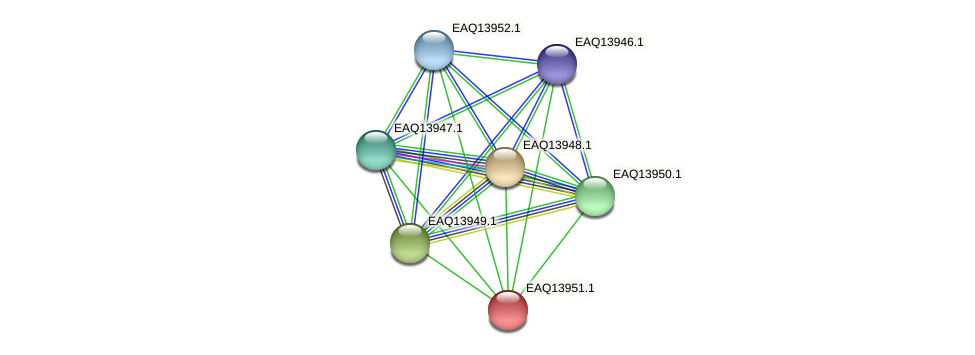 RB2654_12799 protein (Maritimibacter alkaliphilus) - STRING interaction network