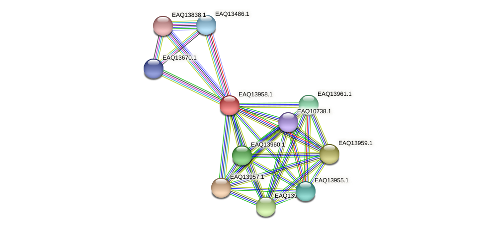 RB2654_12834 protein (Maritimibacter alkaliphilus) - STRING interaction network