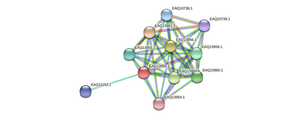 RB2654_12839 protein (Maritimibacter alkaliphilus) - STRING interaction network
