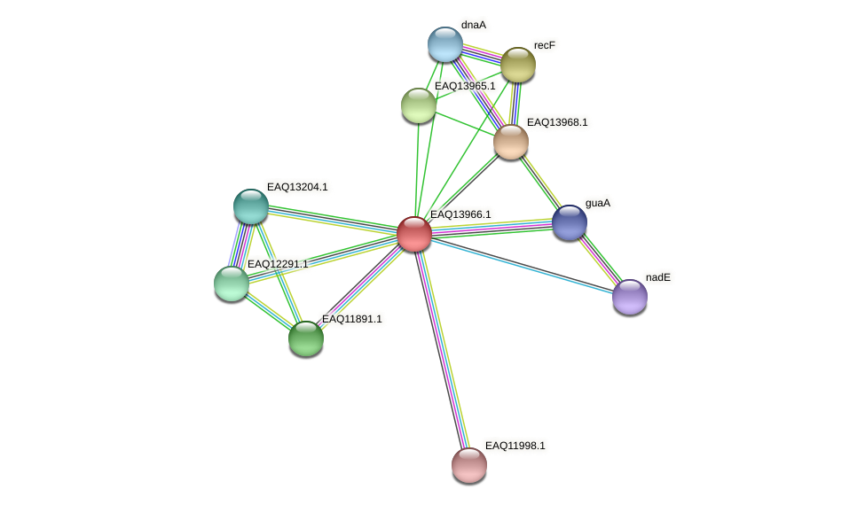 RB2654_12874 protein (Maritimibacter alkaliphilus) - STRING interaction network