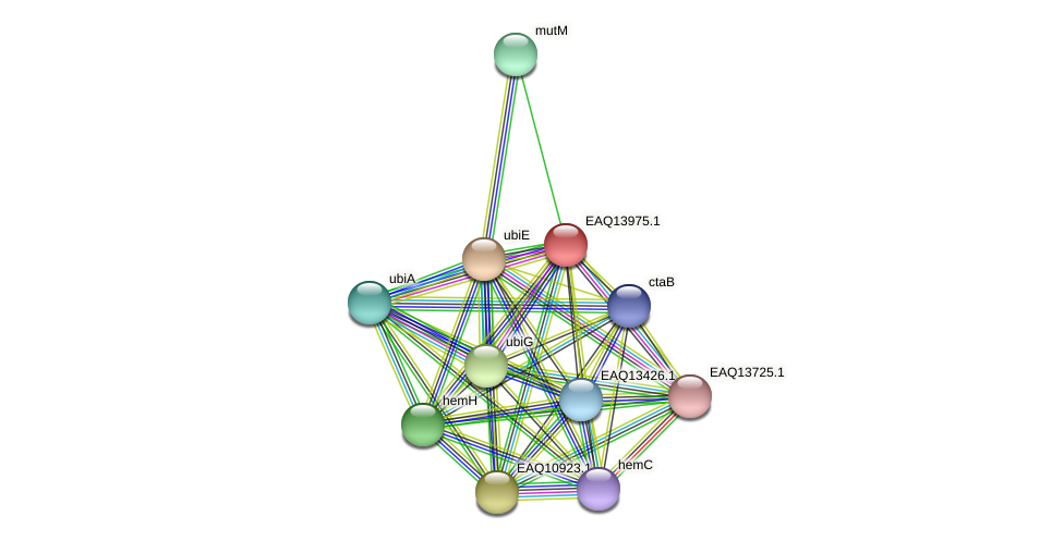 RB2654_12919 protein (Maritimibacter alkaliphilus) - STRING interaction network