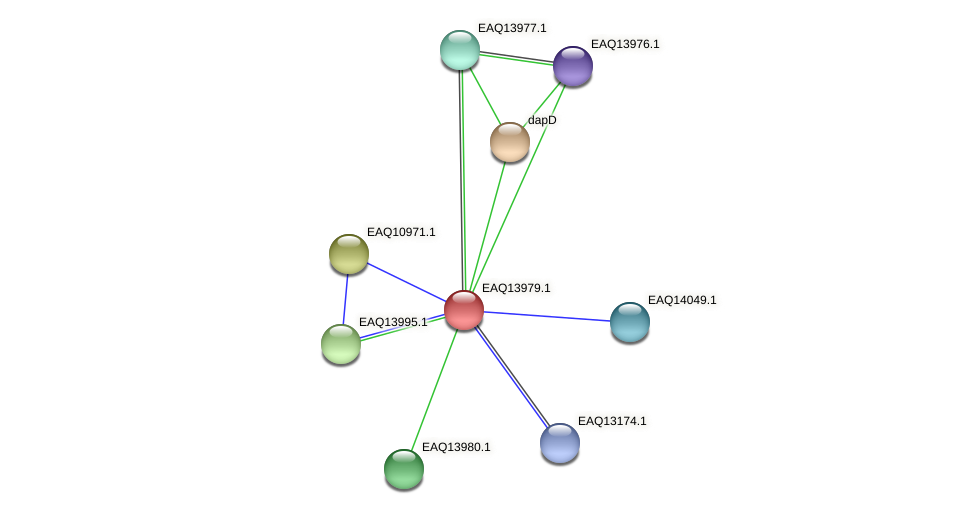 RB2654_12939 protein (Maritimibacter alkaliphilus) - STRING interaction network