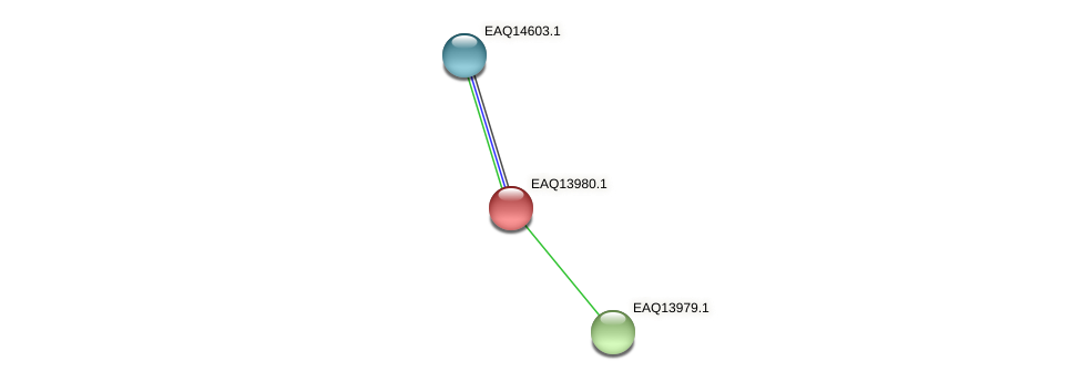 RB2654_12944 protein (Maritimibacter alkaliphilus) - STRING interaction network