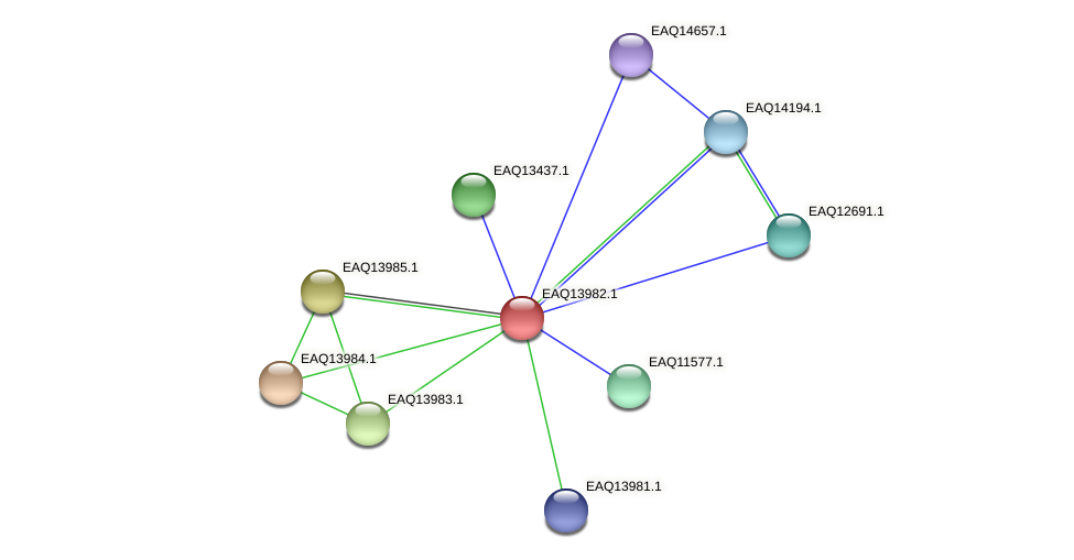 RB2654_12954 protein (Maritimibacter alkaliphilus) - STRING interaction network
