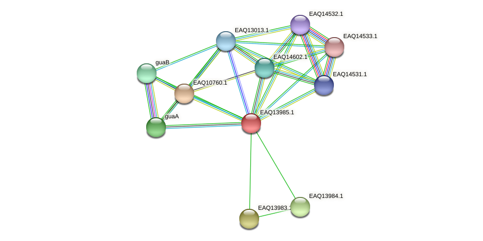 RB2654_12969 protein (Maritimibacter alkaliphilus) - STRING interaction network