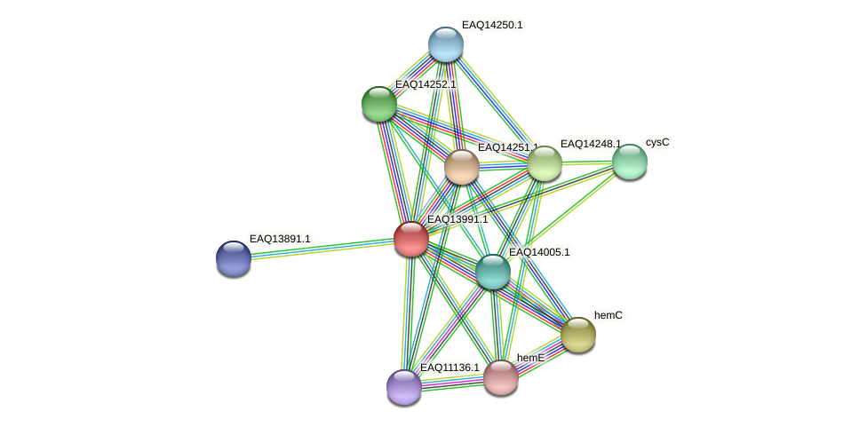 RB2654_12999 protein (Maritimibacter alkaliphilus) - STRING interaction network