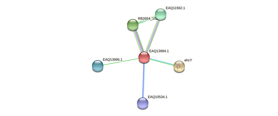 RB2654_13014 protein (Maritimibacter alkaliphilus) - STRING interaction network