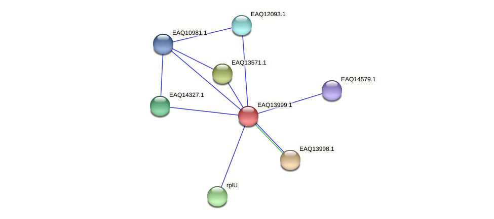 RB2654_13039 protein (Maritimibacter alkaliphilus) - STRING interaction network