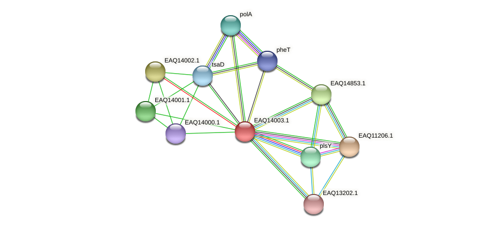 RB2654_13059 protein (Maritimibacter alkaliphilus) - STRING interaction network