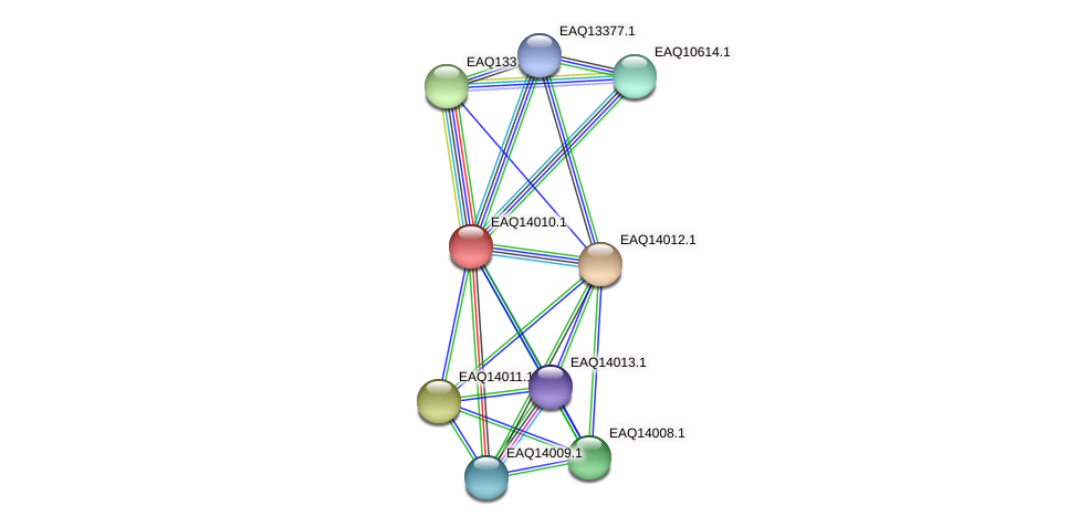 RB2654_13094 protein (Maritimibacter alkaliphilus) - STRING interaction network