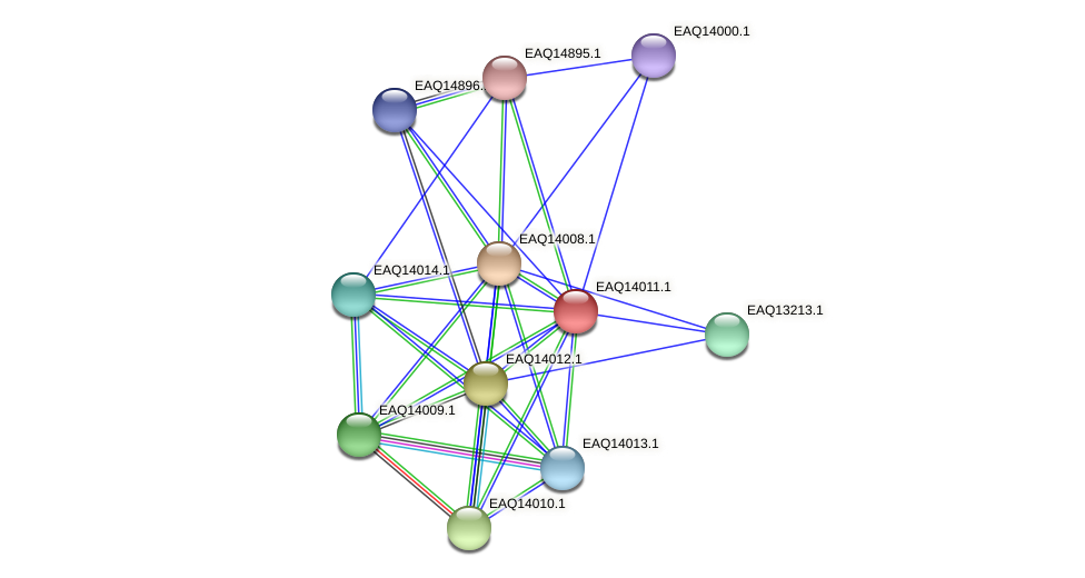 RB2654_13099 protein (Maritimibacter alkaliphilus) - STRING interaction network