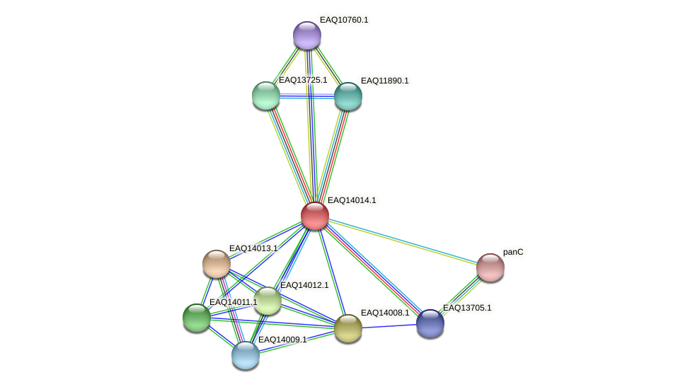 RB2654_13114 protein (Maritimibacter alkaliphilus) - STRING interaction network