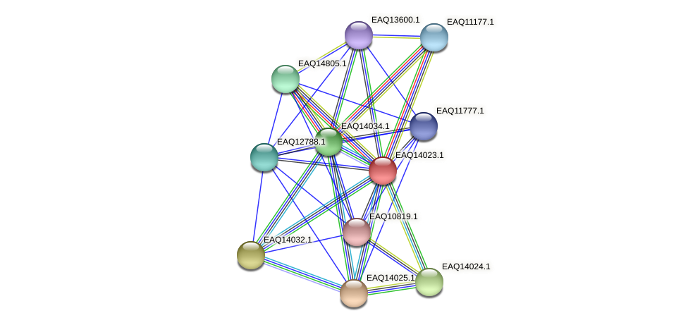 RB2654_13159 protein (Maritimibacter alkaliphilus) - STRING interaction network