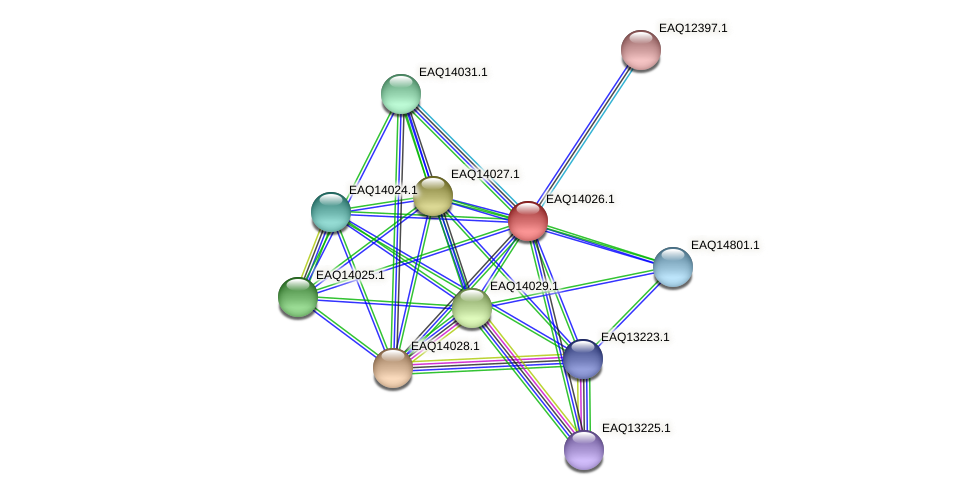 RB2654_13174 protein (Maritimibacter alkaliphilus) - STRING interaction network