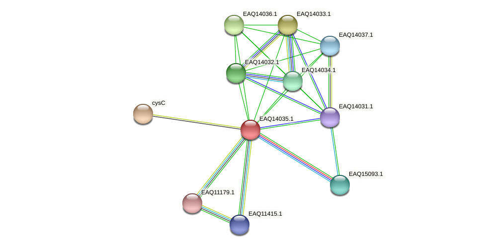 RB2654_13219 protein (Maritimibacter alkaliphilus) - STRING interaction network