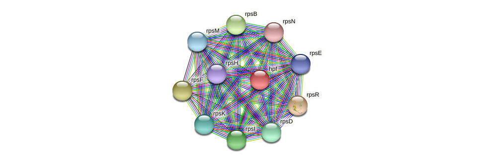 RB2654_13254 protein (Maritimibacter alkaliphilus) - STRING interaction network
