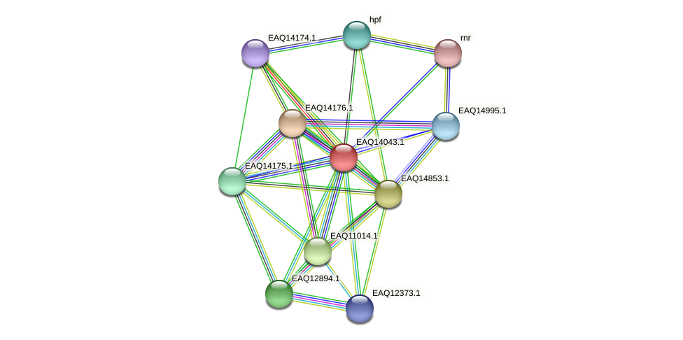 RB2654_13259 protein (Maritimibacter alkaliphilus) - STRING interaction network