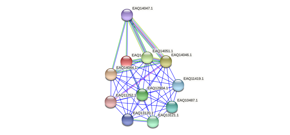RB2654_13269 protein (Maritimibacter alkaliphilus) - STRING interaction network