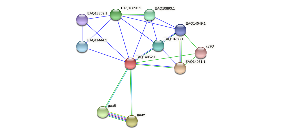 RB2654_13304 protein (Maritimibacter alkaliphilus) - STRING interaction network