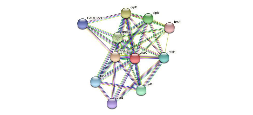 dnaK protein (Maritimibacter alkaliphilus) - STRING interaction network