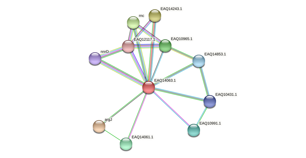 RB2654_13359 protein (Maritimibacter alkaliphilus) - STRING interaction network