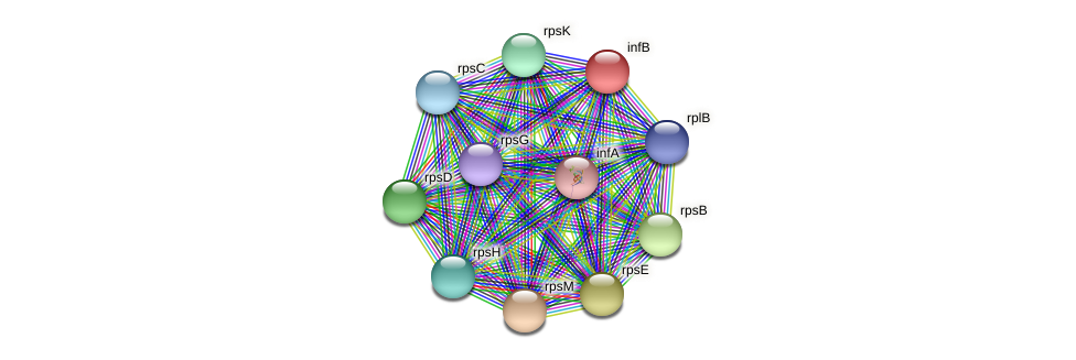infB protein (Maritimibacter alkaliphilus) - STRING interaction network