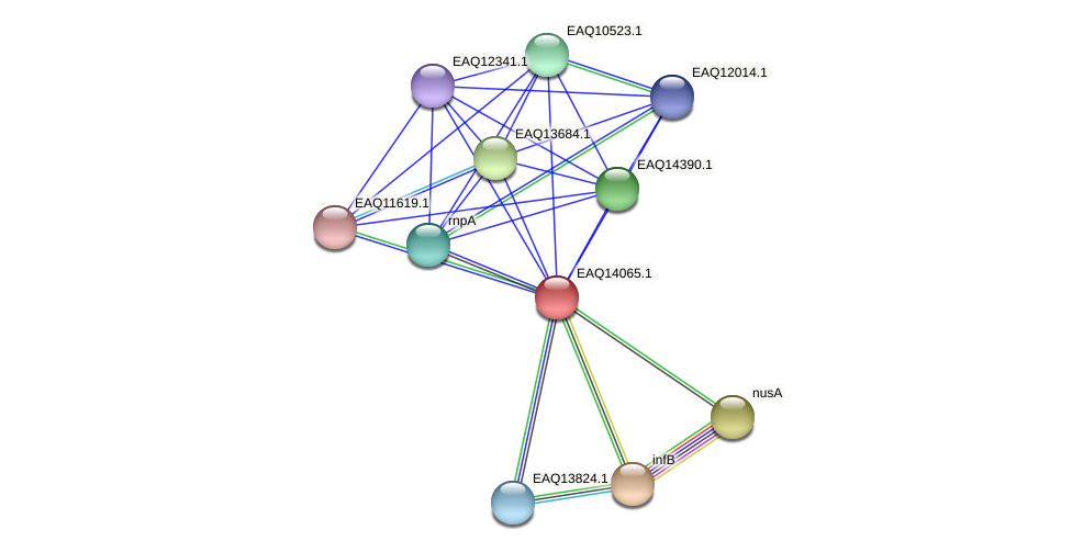 RB2654_13369 protein (Maritimibacter alkaliphilus) - STRING interaction network