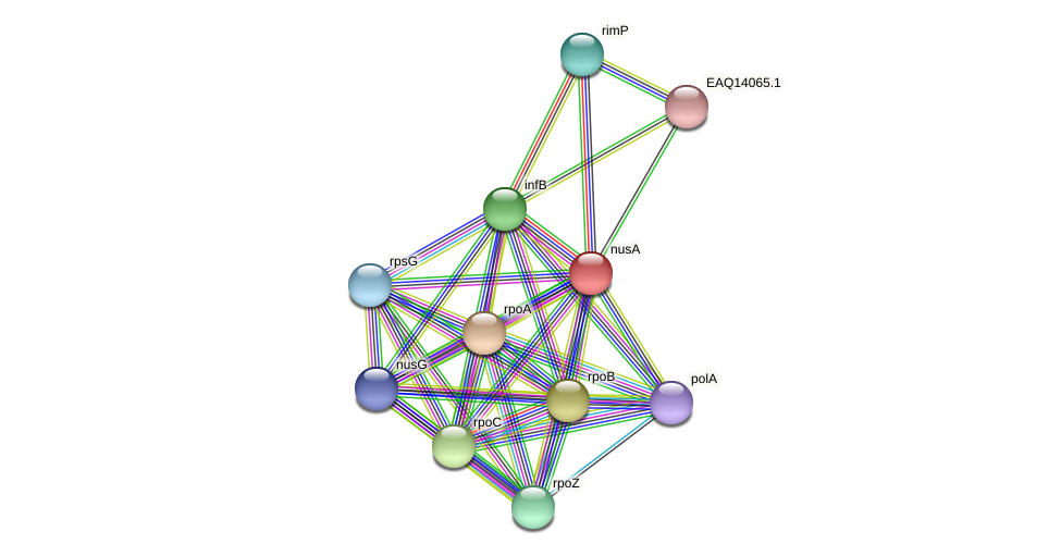 nusA protein (Maritimibacter alkaliphilus) - STRING interaction network