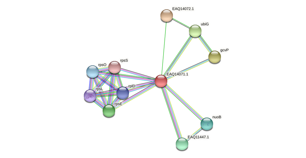 RB2654_13399 protein (Maritimibacter alkaliphilus) - STRING interaction network