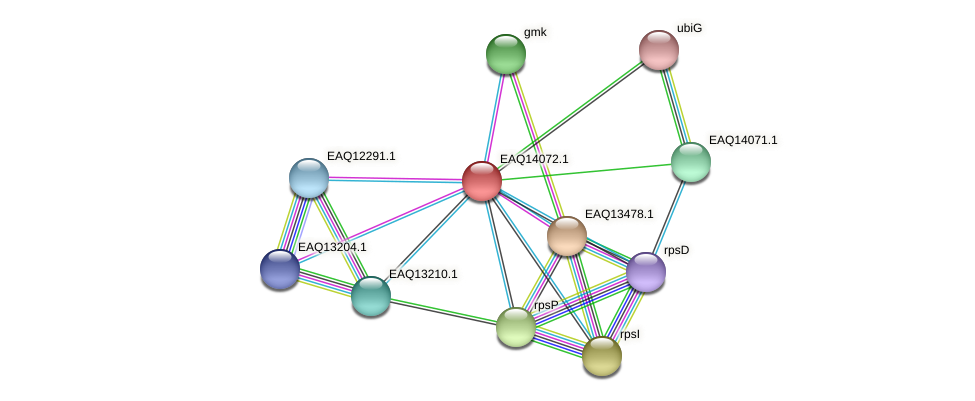 RB2654_13404 protein (Maritimibacter alkaliphilus) - STRING interaction network