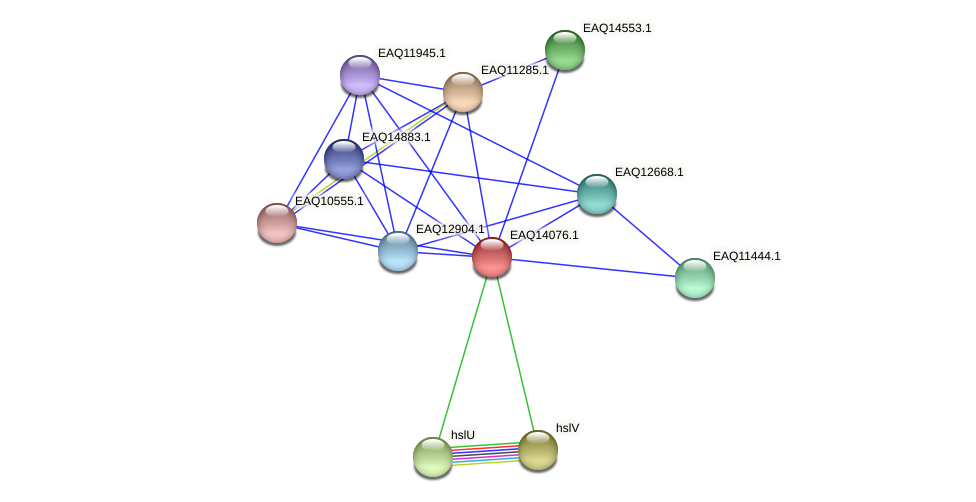 RB2654_13424 protein (Maritimibacter alkaliphilus) - STRING interaction network